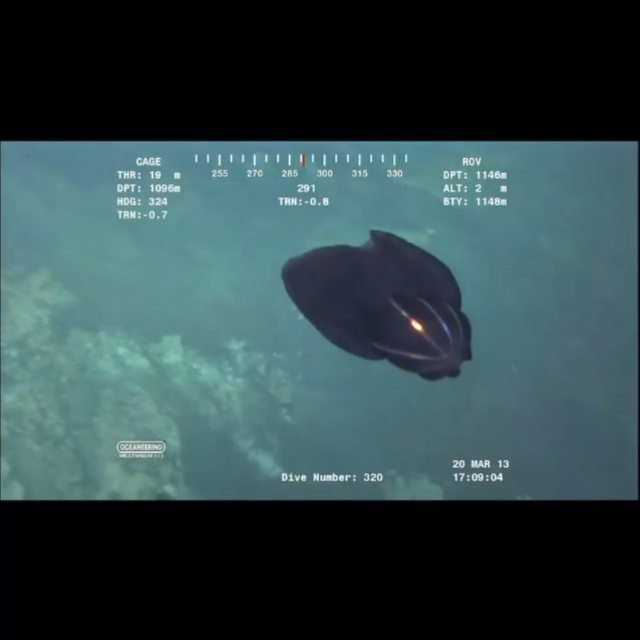 Wow check out this underwater deep sea video of this creature / USO from the Indian Ocean… What is that?  Alien or Jellyfish? 🤔 #